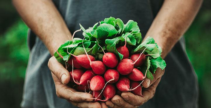 Food Harvest
